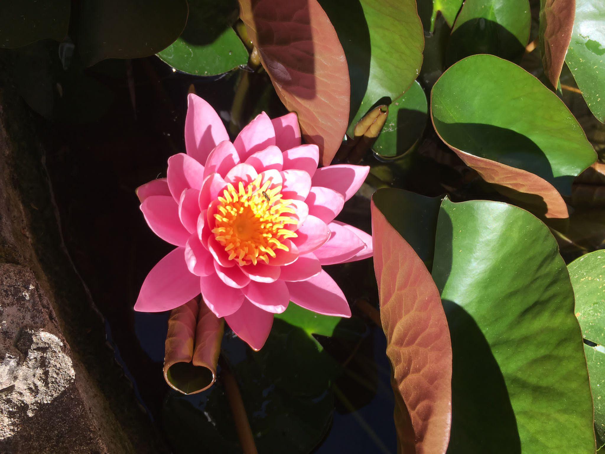 lotus-associazione-armonia
